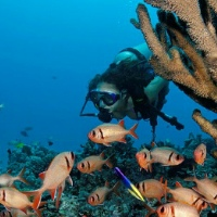 Advanced Open Water Dive Certification