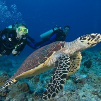 Private Open Water Dive Certification