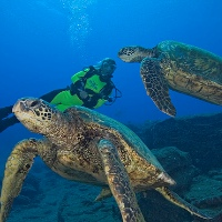 Advanced Private Open Water Dive Certification